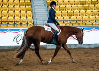 QXH Sweet Dreams N Lies, ridden by Carol Ahern, in the Select Amateur Hunter Under Saddle.