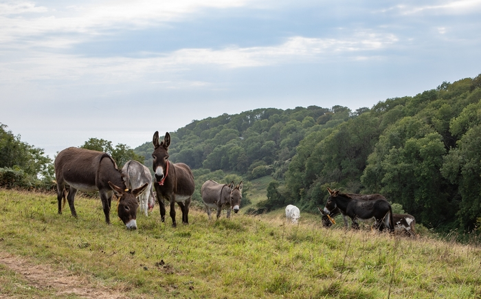 Donkeys at The Donkey Sanctuary
