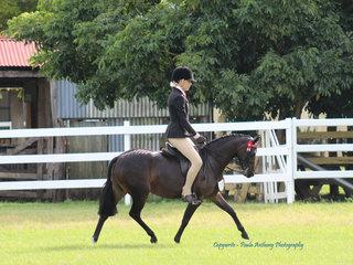 Reserve Champion Pony