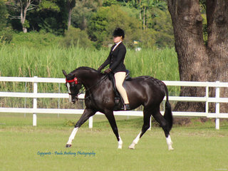 Champion Hack exhibited by Ada Spring
