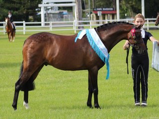Champion Led Pony and Supreme Led Bordershow Castille