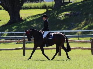 Tremayne True Moment and Charlee Anthony working out to win the Australian Saddle Pony Under saddle