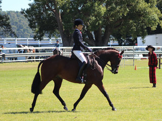 Reserve Champion Galloway Dancing Ace of Sefton exhibited by Kristy Hill Lollback