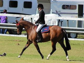Champion Galloway and champion riden ANSA Tremayne Royal Opera ridden by Charlee Anthony