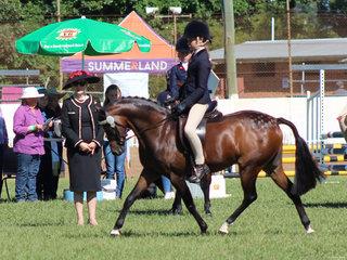 Champion Pony Bordershow Castille ridden by Anastasia Blanch