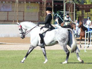 Champion Adult Rider Aloani Ware