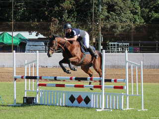 Brock Everingham  goes clear for a win in the Jumping