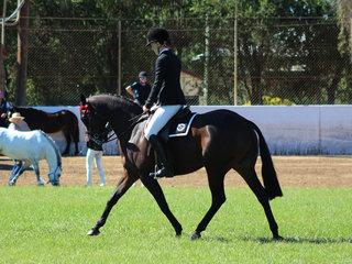 Tremayne True Moment  exhibited by Charlee Anthony working out to win the Australian Saddle Pony Under saddle