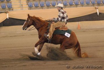 Warren Cox from Rosewood in Queensland rode G and C Hargrave's, Bellamy Jacqueline to second place in the Novice Horse Open, scoring 142.