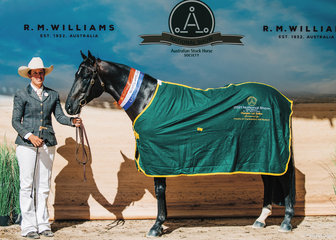 Champion Led Stallion 5yo & Over was claimed by Dillons Cabernet, owned by Michael & Holly Dillon.