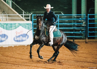 Emugully Laidley -HSH in the Novice Working Stallion, ridden by Carly Domrow.