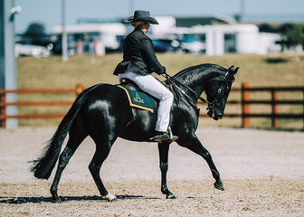Maddy Bryans & Hillviewlodge Opulent claimed 3rd in the Novice Hack Mare 4yo.