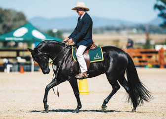 Shane Everingham & Coolidowns Houdini claimed 1st place in the Novice Hack Colt 2yo.