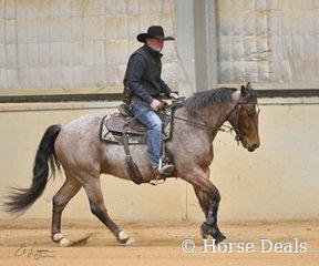 Adrian Ireland riding Adrians Horse