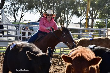 Tammy Hewitt moving cattle in the #10 Masters Class