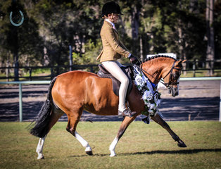 EA Newcomer Small Hunter Pony - Westbury Boudicca ridden by  Georgia Cronin owned by  Carrie Furey