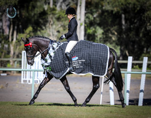 Jessica Fedrick and Calculated  - Champion Owner Rider Hack