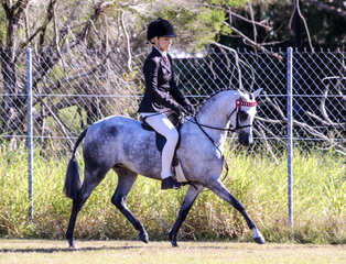 RS Vera Wang - Rider Centaine Latham - Owner Karen Shaw - Best Led Show Horse 3rd, Newcomer Medium Pony 2nd Intermediate