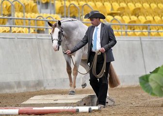Each To Their Roan shown by Dylan Hughes