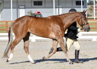Mustang Just Talkin to Ya, shown by Travis Baird.