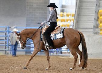 SRQ Kissin Georgia ridden by Peta Hicks.