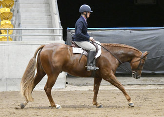 YB Seeking A Kiss in Hunter Under Saddle with Frances Coombes