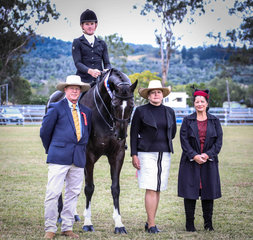 Supreme ridden of the show was Mel Walers Rueben Star ridden by Rhys Stanley pictured with judges Craig Wass Rosslyn Stratford and Sharon Goss