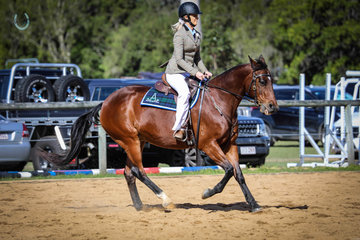 Alana bell and Scotty Doesn't Know placing 1st led ASH gelding and champion ASH gelding and seen here winning the ASH lady rider