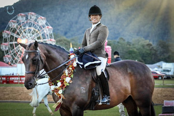 Federer ridden by Adam Oliver and owned by Kate Kyros was the Supreme Show Hunter Horse