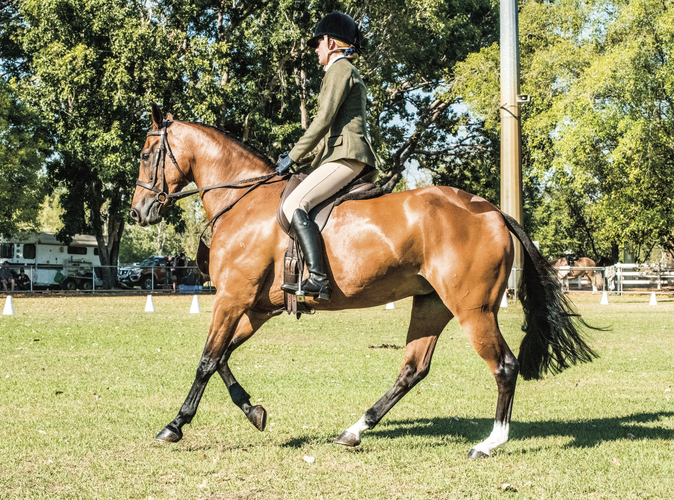 From remote station mare to show hunter - The beautiful Tyra who is now heading from the Kimberley to Grand Nationals in 2020. Photo: Valley Photography NT