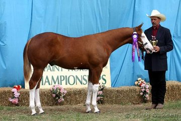 Champion of the 2005 Gelding class was Awe Shucks (J & H McLean).