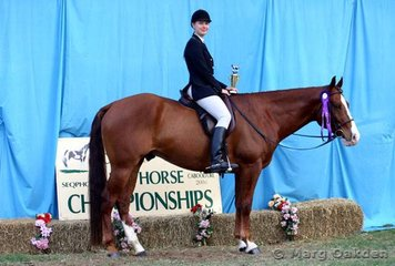 State champions of the Amateur Hunter Under Saddle were Lily Brisick & On The Rocks.