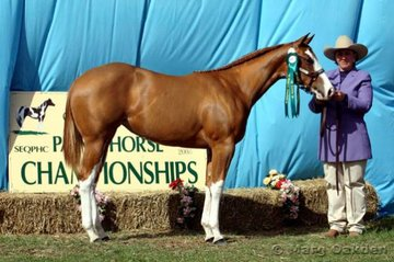 Reserve Champion 2005 Filly, Count The Cowgirls, shown by Sam Daley for owners Bevin & Merilyn Schulz.
