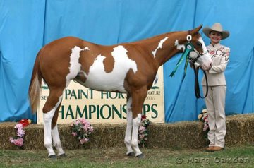 Reserve Champions of the Amateur Mare/Filly class were Melissa Cruden & Awefected.
