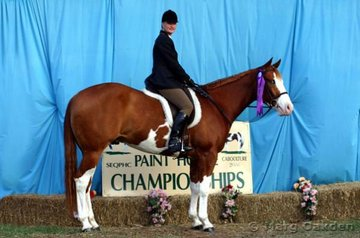 Kill F Loot & Desrae Gant were the champions of the 2 Year Old Hunter Under Saddle.