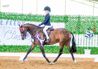 Carlingford Park Supreme Court trotting out with the coveted Championship in the Emma & Duane Ashton Childs Large Show Pony class