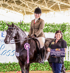 Clemson Tuxedo giving Kirsty Harper-Purcell an incredible ride to be awarded the Paul Austin Equitation Small Hunter Galloway Championship