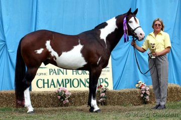 The winner of the Stallion/Colt Hunter In Hand was Garth Brooks shown by Meredith Rehn.