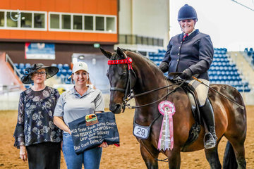 """Leigh Sears continuing her successful return to the competition ring, aboard """"Kirralee Christian Dior"""" awarded Champion Home Produced Open Galloway & Reserve Champion Open Large Galloway."""