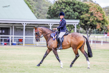 Lil's Equine Collective Newcomer Show Hack over 15hh awarded to Kath Gallaway & her exhibit 'Landale'