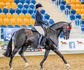 Kristen Bates Taunton aboard her own Dreamtime Xtravaganza trotting their way to Reserve Champion Large Open Hack, sponsored by Ballina Dry Cleaners