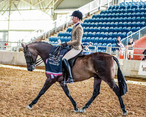 Manorvale Salvatore owned by Emma Ashton & produced by Universal Stables, expertly ridden by Rhys Stanley to the Reserve Championship in the PAE Small Hunter Galloway