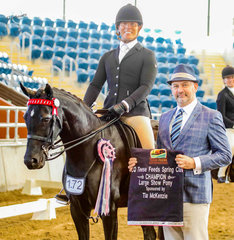 Royalwood After Dark continues her very successful campaign with the Tia McKenzie Large Show Pony Championship, produced by Universal Stables