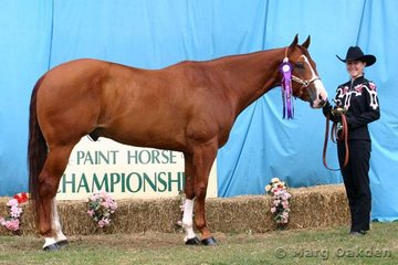 Instant Loot (Rebecca Gant) was the Gelding 4 Years Old & Over champion.