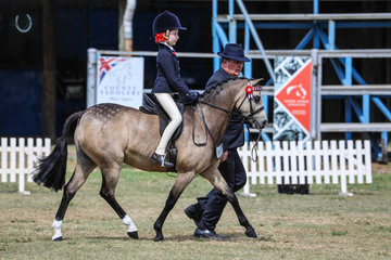 Border Show Magic Mike showing his fabulous form on his way to winning the the Leading rein Show pony with Chloe Blair on board and Paul Austin