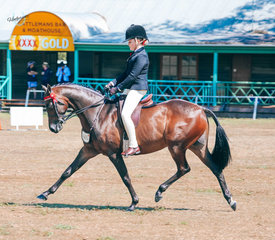 Bella Anderson and Mandaley Lord Lichfield trotting their way to victory in the Childs meduim show pony