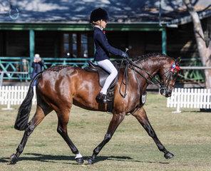 Carlingford Park Supreme Court Alli Reinke 3rd Childs large open pony