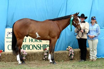 Reserve Champion 2004 Gelding, Only With Concent, with handler Leanne Bartlett & owner Carleen van Peperzeel.