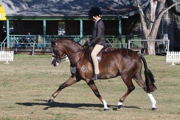 Gatehampton Park Monte Carlo ridden by Fraser Deverill Runner Up Medium Show Hunter Pony