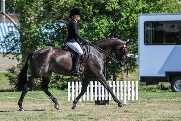 Toushea ridden by Taylor Humphreys. Reserve champion childs Small hack and reserve champion rider 15 to 17 yrs